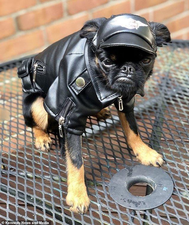Мережу розвеселив найсуворіший пес у світі: кумедні фото - фото 383543