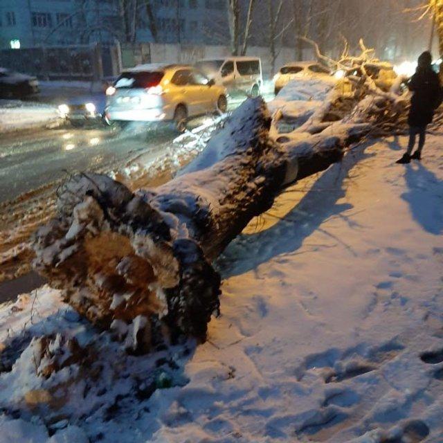 У мережі показали наслідки сніжної негоди в Україні - фото 384424
