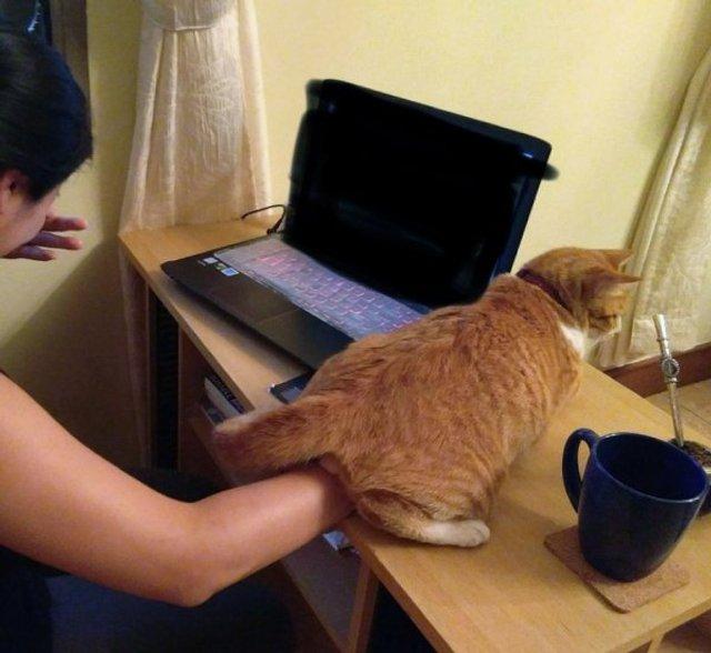 Реалії життя з котом: епічні фото з нахабними улюбленцями - фото 385712