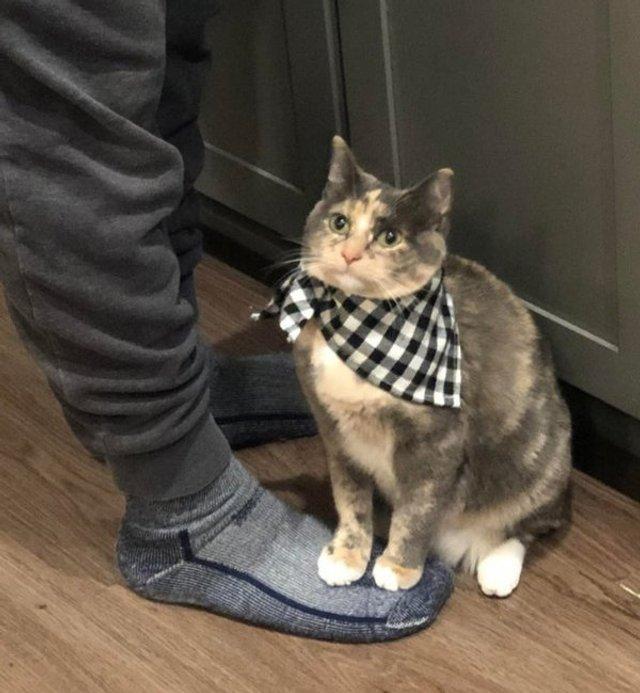 Реалії життя з котом: епічні фото з нахабними улюбленцями - фото 385713