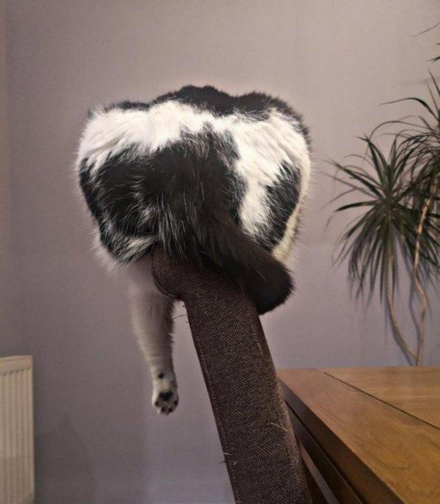 Реалії життя з котом: епічні фото з нахабними улюбленцями - фото 385714