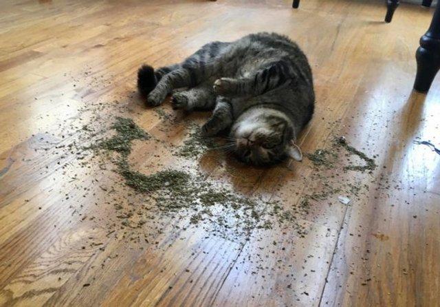 Реалії життя з котом: епічні фото з нахабними улюбленцями - фото 385715