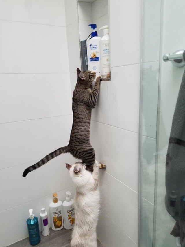 Реалії життя з котом: епічні фото з нахабними улюбленцями - фото 385716