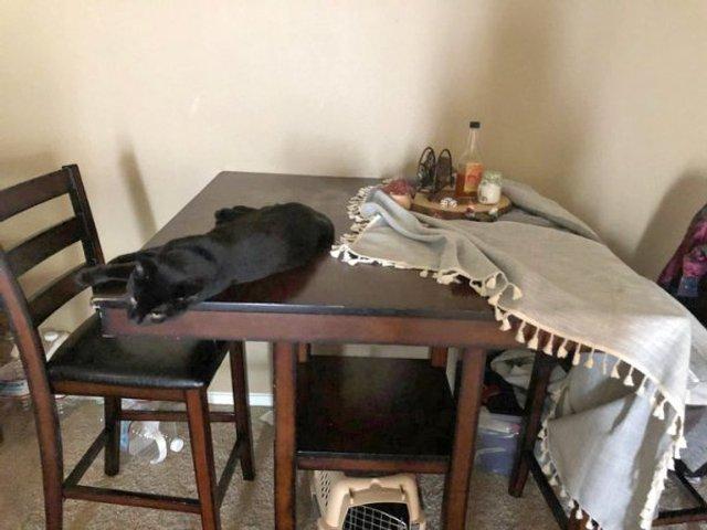 Реалії життя з котом: епічні фото з нахабними улюбленцями - фото 385717