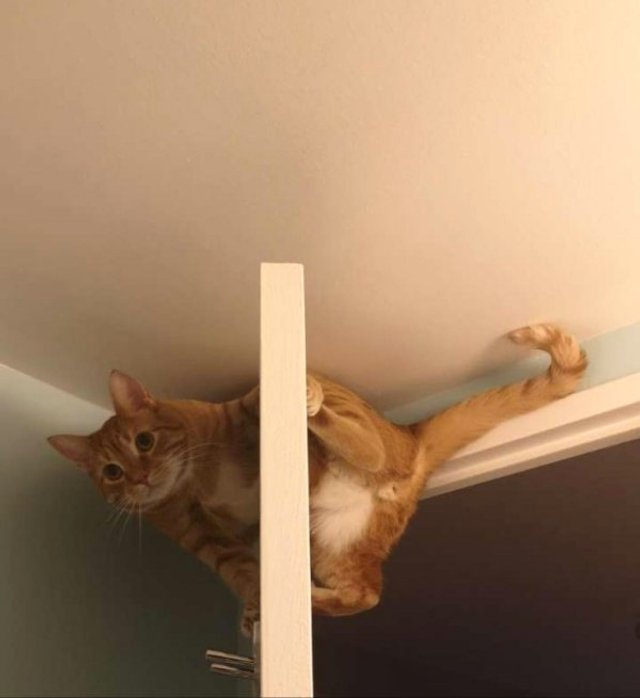 Реалії життя з котом: епічні фото з нахабними улюбленцями - фото 385718