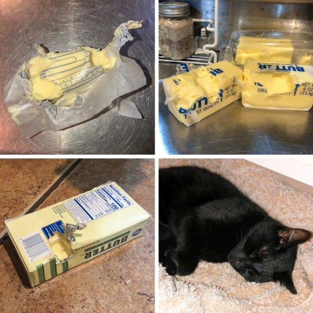 Реалії життя з котом: епічні фото з нахабними улюбленцями - фото 385723