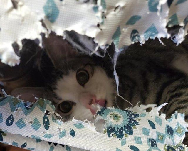 Реалії життя з котом: епічні фото з нахабними улюбленцями - фото 385726