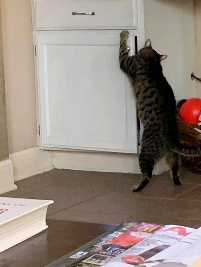 Реалії життя з котом: епічні фото з нахабними улюбленцями - фото 385727