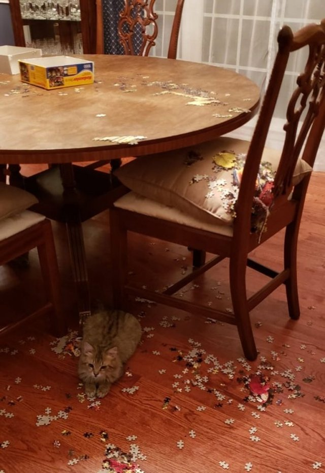 Реалії життя з котом: епічні фото з нахабними улюбленцями - фото 385728