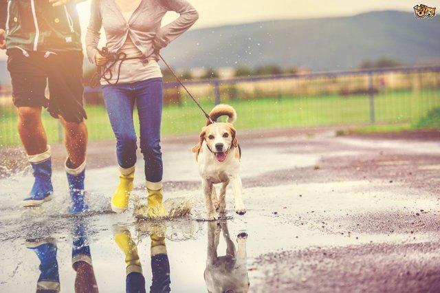 Собака дозволить завжди залишатися фізично активними - фото 386149