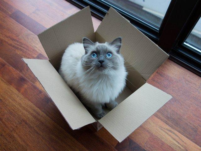 Коти сидять у коробках, аби знизити рівень стресу - фото 387548