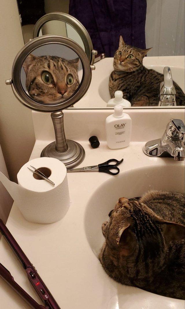Розгублені коти, які дивляться на себе в дзеркало, стали зірками мережі: кумедні фото - фото 388100