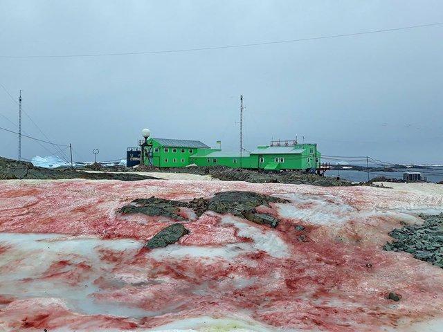 В Антарктиді сніг став багряного кольору: фотофакт - фото 388239