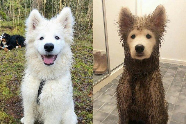 Не час нудьгувати: епічні фото, чому варто завести собаку - фото 388685