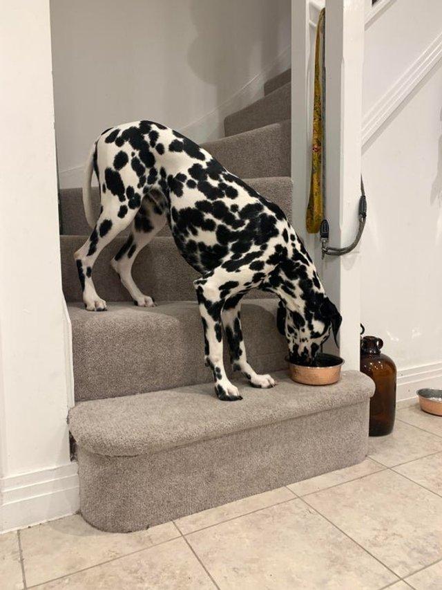Не час нудьгувати: епічні фото, чому варто завести собаку - фото 388696