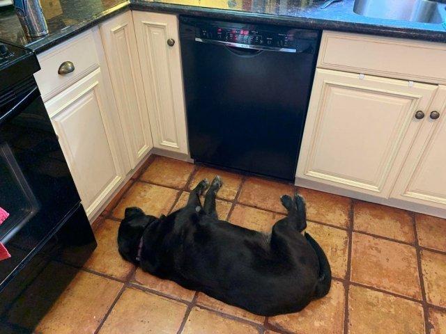 Не час нудьгувати: епічні фото, чому варто завести собаку - фото 388697