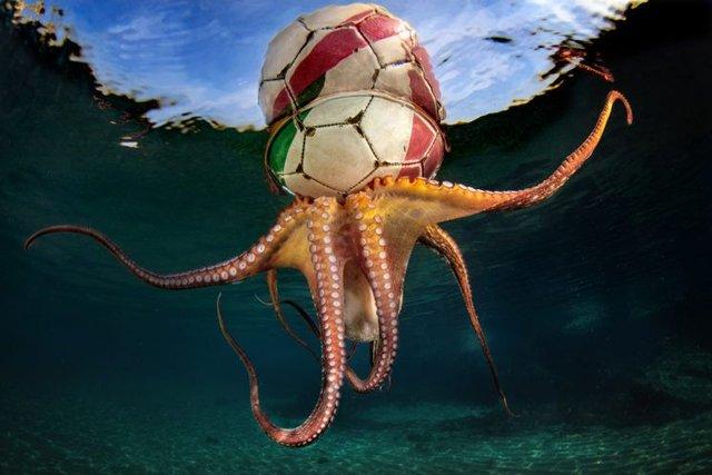 Названо переможців конкурсу підводної зйомки: кадри заворожують - фото 389092
