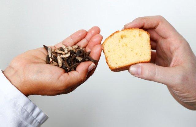 Вчені приготували кекс з 'масла' комах - фото 389279
