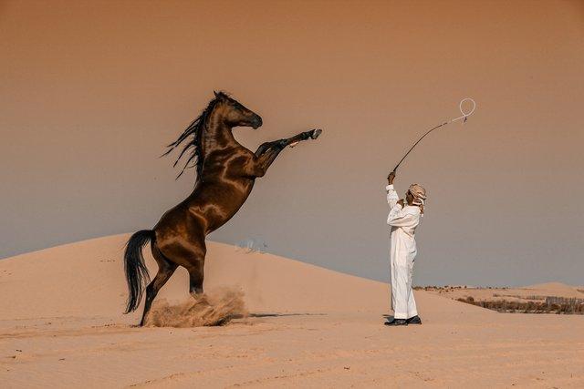 Фотопремія Sony визначила найкращі фото з різних кутків світу: кадри заворожують - фото 391882
