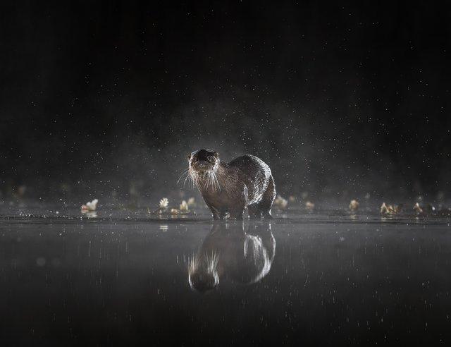 Фотопремія Sony визначила найкращі фото з різних кутків світу: кадри заворожують - фото 391887