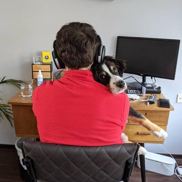 Як виглядає робота вдома, коли є домашні улюбленці: веселі фото - фото 392964