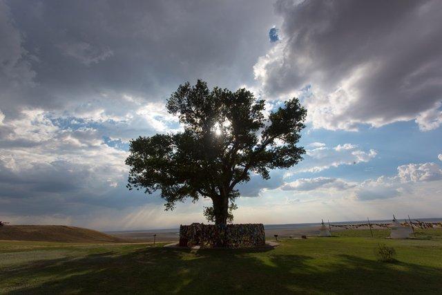 В Європі вибрали дерева року: вражаючі кадри - фото 393230