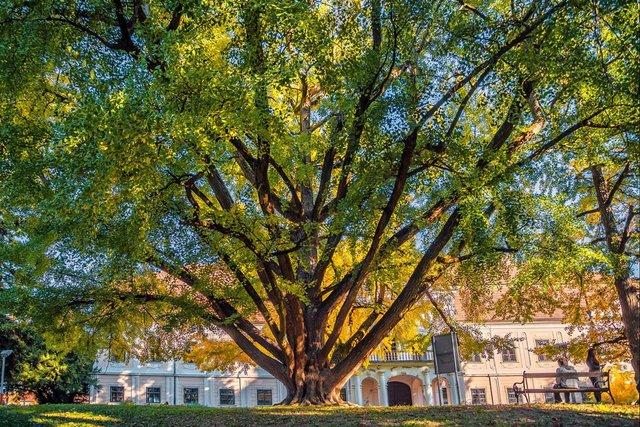 В Європі вибрали дерева року: вражаючі кадри - фото 393231