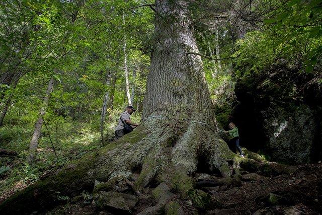 В Європі вибрали дерева року: вражаючі кадри - фото 393232