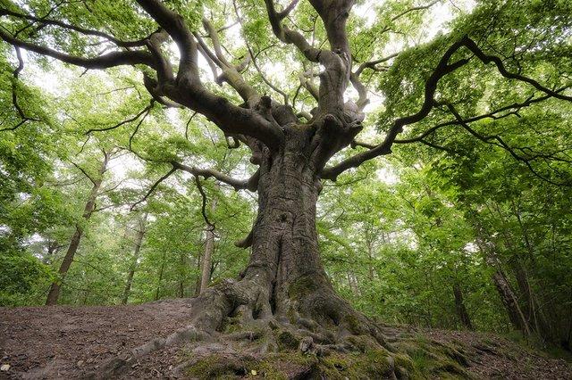 В Європі вибрали дерева року: вражаючі кадри - фото 393233