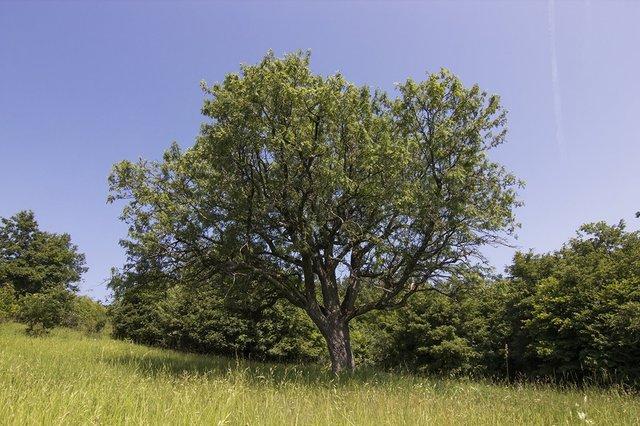 В Європі вибрали дерева року: вражаючі кадри - фото 393234