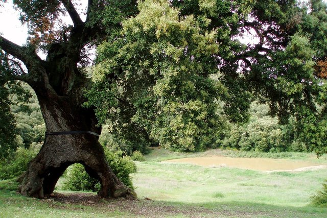 В Європі вибрали дерева року: вражаючі кадри - фото 393235