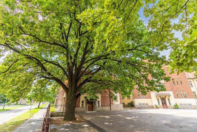 В Європі вибрали дерева року: вражаючі кадри - фото 393236