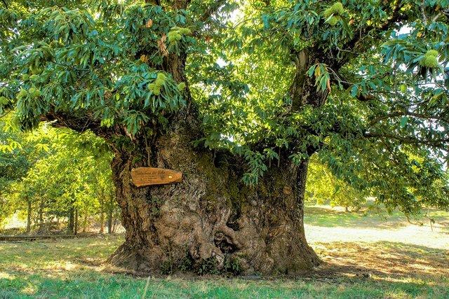 В Європі вибрали дерева року: вражаючі кадри - фото 393237