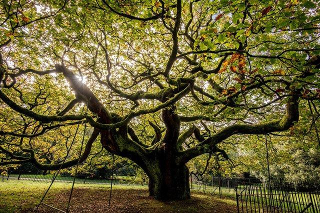 В Європі вибрали дерева року: вражаючі кадри - фото 393238