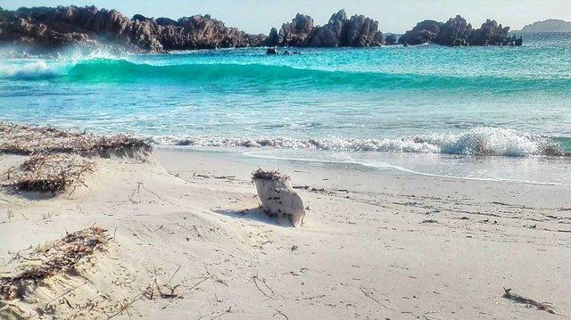 Італієць, який 30 років прожив на острові, розповів, як перенести самоізоляцію - фото 393923
