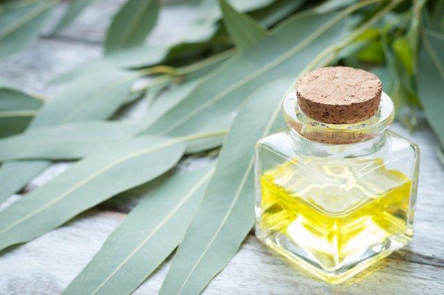 Олія евкаліпту полегшує кашель - фото 394594
