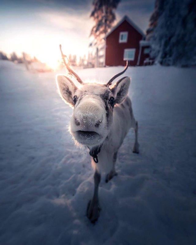 Фінляндець робить вражаючі фото, які нагадують казку - фото 394647