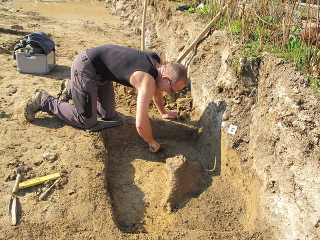 Археологи знайшли бивень мамонта завдовжки 2,5 метра - фото 394799
