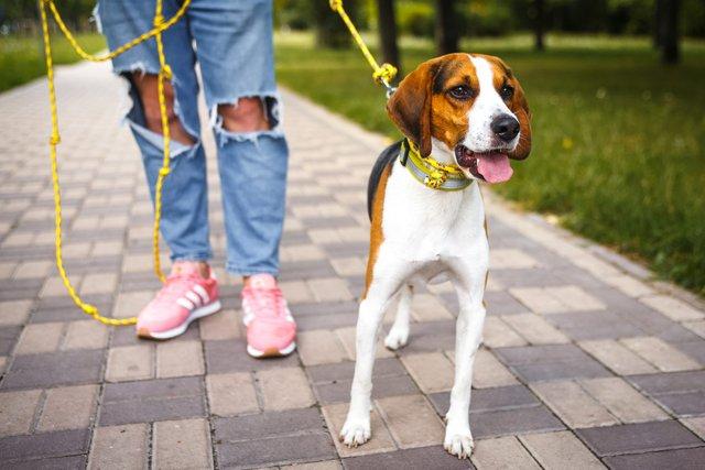 Домашніх тварин вигулювати можна і в парках - фото 396152