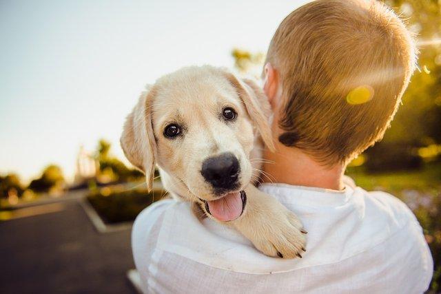 Не собак і не одяг: що треба дезінфікувати, аби захистись від коронавірусу - фото 396366
