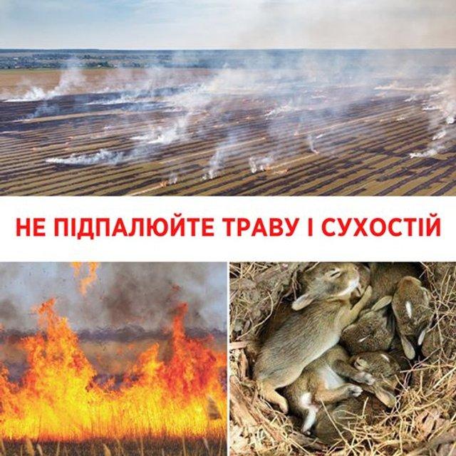 Чому не можна спалювати суху траву навесні: пояснення Супрун - фото 396982