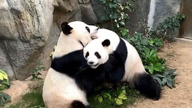 Позитивні новини тижня: від цвітіння магнолій до народження панд - фото 397497