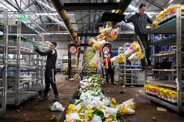 У Нідерландах знищили 400 мільйонів квітів через коронавірус - фото 397780