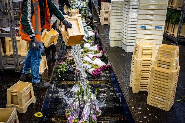 У Нідерландах знищили 400 мільйонів квітів через коронавірус - фото 397781