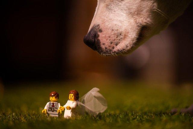 Карантин – не завада: весільний фотограф зробив фотосесію для Lego-молодят - фото 398106