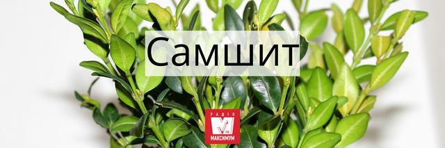 10 українських слів про Великдень, які подарують святковий настрій - фото 398319