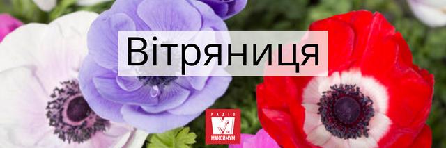 Говори красиво: 10 українських назв квітів, які милують око - фото 400896