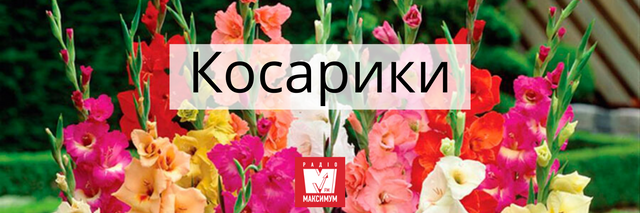 Говори красиво: 10 українських назв квітів, які милують око - фото 400899