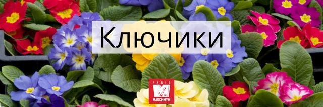 Говори красиво: 10 українських назв квітів, які милують око - фото 400902