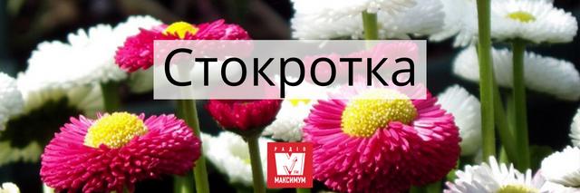 Говори красиво: 10 українських назв квітів, які милують око - фото 400904